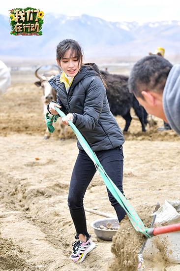 《我们在行动》扶贫脚步进西藏 Angelababy俞灏明克服高反耕地