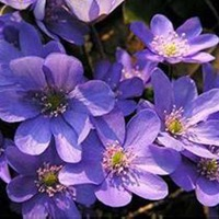 花卉植物盆栽方法